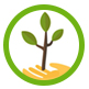 icon_umpflanzen