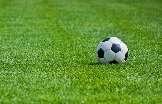 bild_sportundspielrasen